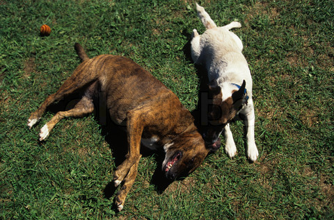 two-dogs-lying-on-the-grass